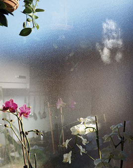 JESSICA BACKHAUS, Orchids in Salzburg, aus der Serie: What still remains,  2008, C-Print, 97 x 71 cm, Ed. 8, € 4.900,-- (o. R.)