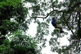 Arenal Ecoglide Canopy Tour