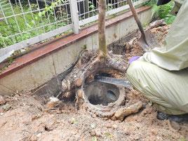 植木の伐根