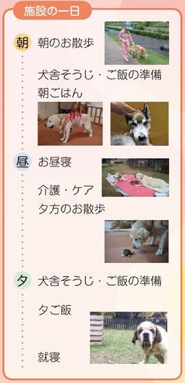 老犬ホーム 施設の一日