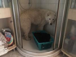 Was soll das denn Frauchen? fragt Blizzi. So kann ich ja nicht duschen!