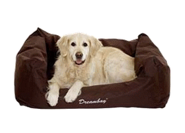 Golden retriever coussin