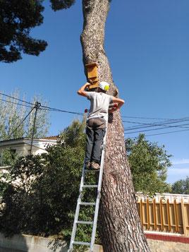 Instal·lació d'un refugi a un arbre