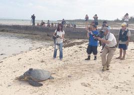 地域の人や報道陣に見送られ自然に帰ったウミガメ=20日、提供写真
