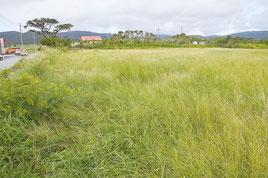 西表島大原の新庁舎建設の候補地(資料写真)