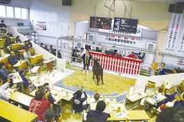 初セリが行われ高値がつくと拍手が送られた=13日、八重山家畜市場