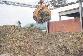 石垣島製糖の操業が始まった