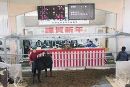 初日、最高値で落札された子牛、手綱を引いた生産者も大喜び=11日、八重山家畜市場