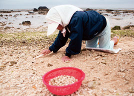 旧暦3月3日のサニズに、白保の海岸で潮干狩りする人