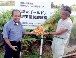 真栄里の試験ほ場で「琉大ゴールド」を手にするホサイン准教授(左)と嶺井さん(提供写真)
