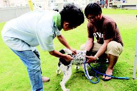 予防接種を受ける飼い犬=1日、双葉公民館