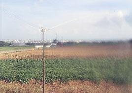 少雨傾向の中、石垣市内の畑ではスプリンクラーが連日稼働している(29日午後)