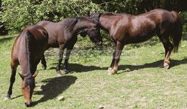 Willkommen zum Ponyreiten beim Ponyhof Sonnenschein