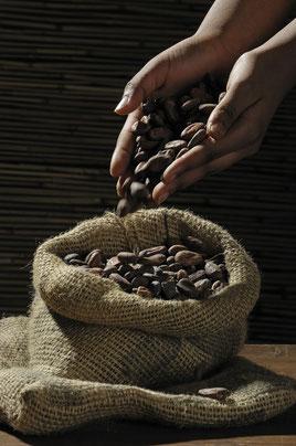 Les fameuses fèves de cacao cru