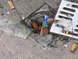 Straße Wassereinlauf Dreck