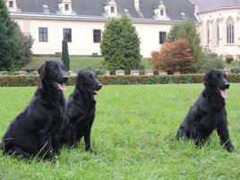 3 E-chen: Eros,  Nelli und Ennio von links