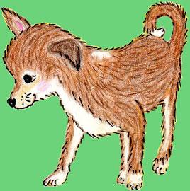 Das Chihuahuamädchen Daisy mit Bällchen (Buntstiftzeichnung)