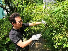 竹を切る師匠