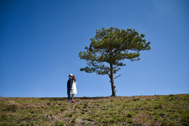 Baum pflanzen, Hochzeitsbrauch Deutschland