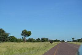 Botswana, Namibia, Transkalahari Highway