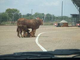 Botswana, Südafrika, Grenzübergang