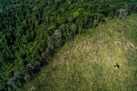 La tala de bosques y la contaminación ambiental aumenta el riesgo de enfermedades. Foto: Greenpeace