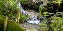 Schweiz Impressionen: Reussdelta, Risletenschlucht, Dampfersinfonie, Alphornbläsertreffen auf der Rigi