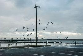 """© Janina Ahrendt """"Cuxhaven"""" (2016)"""