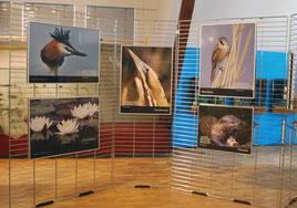 Blick in die Ausstellung, Foto: Dümmer-Museum