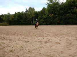 Pferdegerechtes Anreiten von Pferden im Außenbereich.