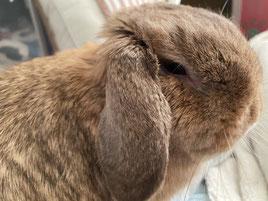 涙が出ているウサギ