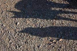 2 Katzenschatten/Cats shadows