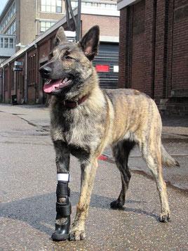 Dyson met een prothese gemaakt door Orthopedieren