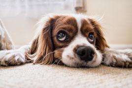 Hund Hundeschule München Erding Trennungsangst