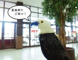 ペルーから来た鳥くん。