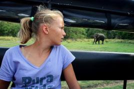 So viele Elefanten, dass man sich nicht mehr nach jedem umdreht
