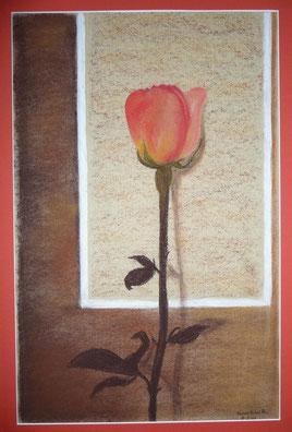 Rose 40x50 cm
