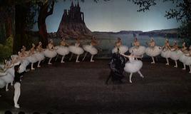 """""""Dance, Magic Dance..."""""""
