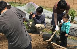 東京都内で農業体験。オーガニックトウモロコシの種まき体験と収穫体験。もぎたて焼きトウモロコシはいかがですか。