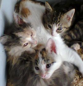 ...Et là avec ses deux autres magnifiques sœurs Thalie et Euphrosyne