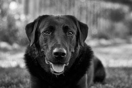 Le nez du chien: Utilisation asymétrique