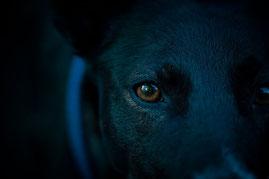 L'empathie chez le chien