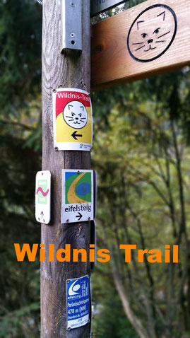 Wildnis Trail iphone 7 Eifelsteig