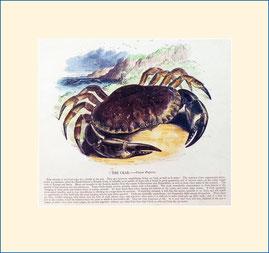 crab, SPCK