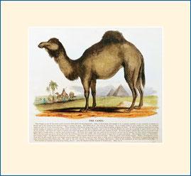 Camel, SPCK