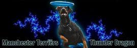 Manchester Terrier Züchter aus den Niederlande