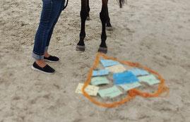 Bewusster entscheiden mit dem Pferd als Co-Coach -  horse-feedback.ch