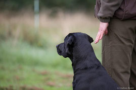 Dogs-at-work - Hundeschule - Dummytraining