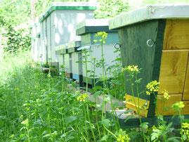 Im Vordergrund: Top-bar-hive Beute