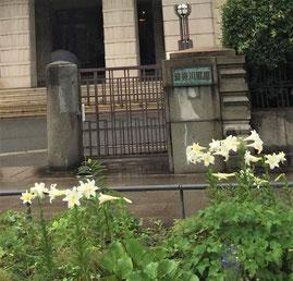 神奈川県庁正門前の白百合